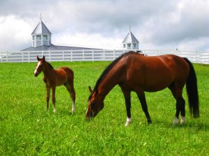 Dutch Warmblood Horses at Pineland Farms in New Gloucester, Maine. Photo by the author.