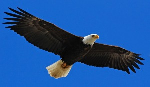 God has more for us as Christians than the tangled thickets of legalism. He wants us to soar like eagles.